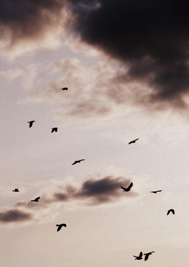 birdyt