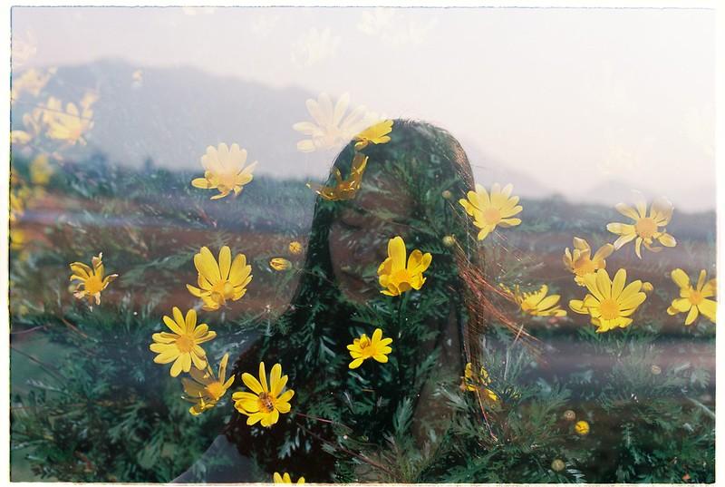 Hoa vs Yellow Cosmos