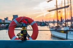 Teddy, the Pirate and Hamburg sunrise