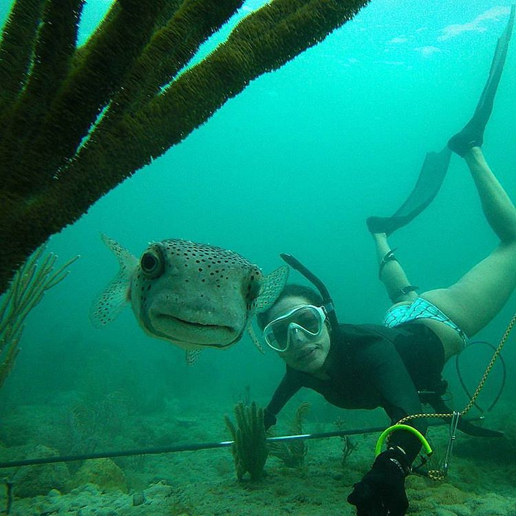 spearfishing.and.freediving.world's most interesting Flickr photos | Picssr