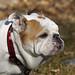 She's a Good Girl by bulldog1