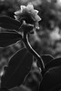 unknownflower