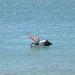 2010-08-SharkBay-68-0727