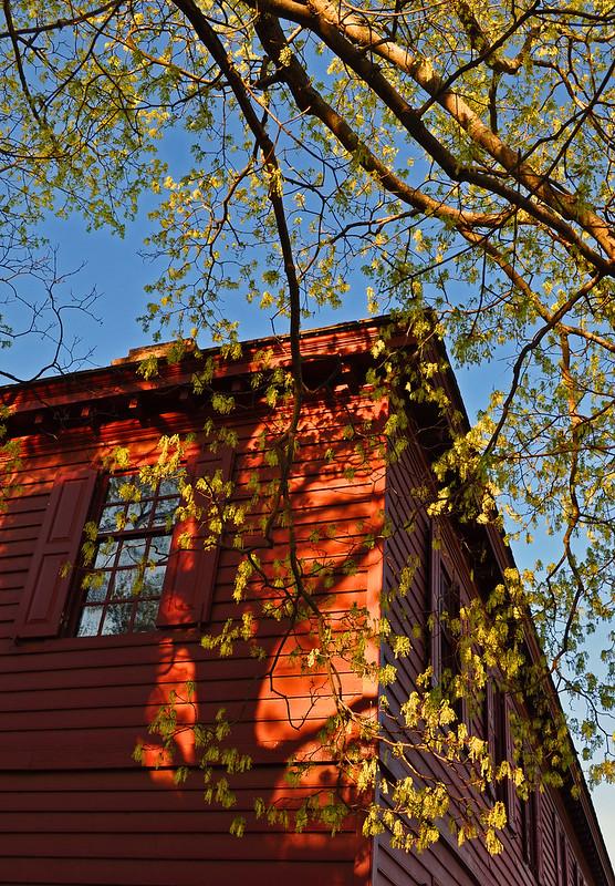 Maple, Peyton Randolf House (2)