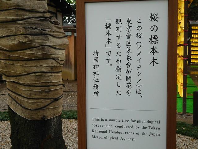 桜の標本木説明書き