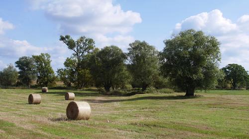 Bäume und Stroh (4675)