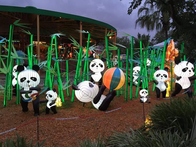Zoominations Pandas