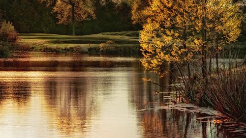 landscape pond marsh cambridgemaryland hyattregencychesapeakebay spring2014 zunikoff