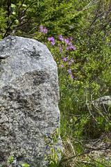 B.L.T. Trail