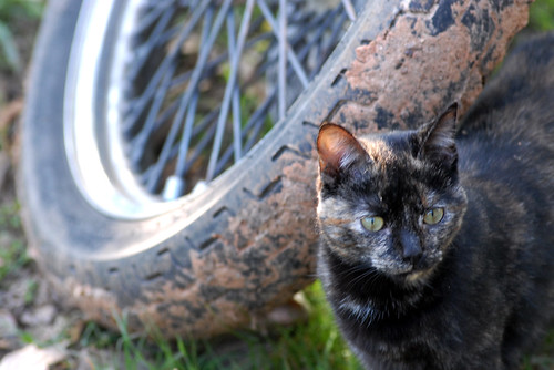 4.10.15 Playing cat and tire
