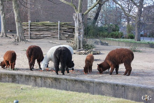 Oster-Montag im Zoo Berlin 06.04.20151