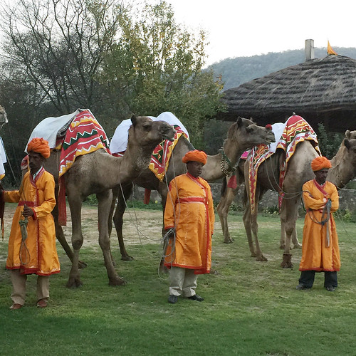 Getting ready for Camel Polo Jaipur