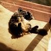 Basking cat #sunnyspot #relaxation #notacareintheworld
