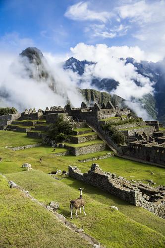 blue mountain green peru berg machu picchu clouds llama wolken perú sierra andes lama grün montaña landschaft anden