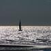Belgian coast by Natali Antonovich