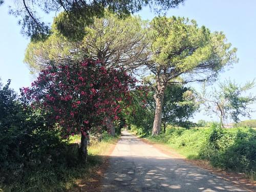 Magical Paths;  Via Porta Serena, Paestum   #Paestum #Ruins #Campania #SouthItaly #FirenzeDiaries #Nature #WalkToRemember