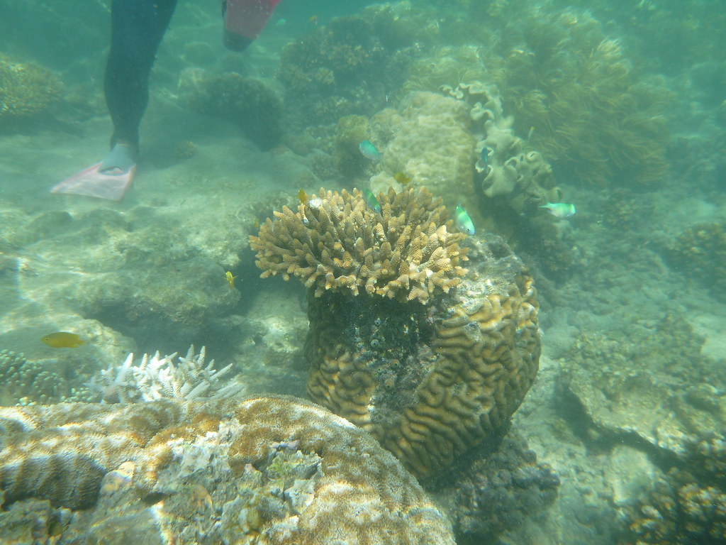 an overview of the great barrier reef in queensland Overview remote sensing and  the great barrier reef foundation is fostering a resilient reef for all generations by catalysing and funding science that.