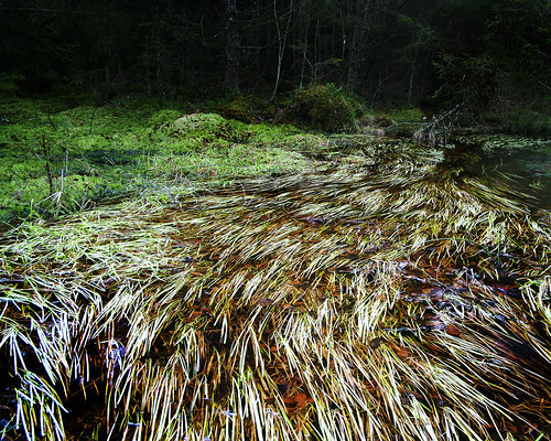 The agabus spot