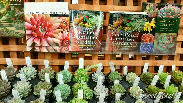 Succulent Gardens and books