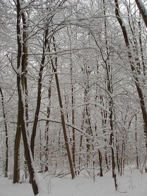 200603030046_snowy_woods