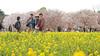Photo:IMG_1054 国営昭和記念公園 花畑 By vicjuan