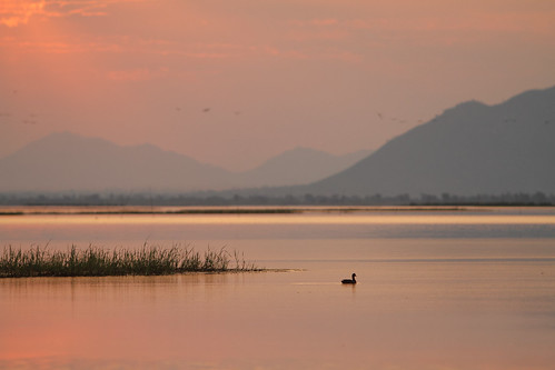 africa sunset terrain sun bird nature weather animal duck scenery dusk hills malawi lakechilwa
