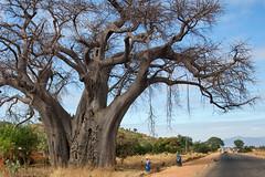 Malawi 2016