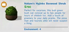 Natures Hyjinks Boxwood Shrub