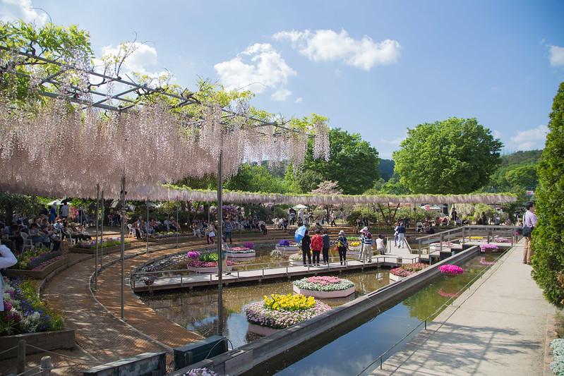 ashikaga_flowerpark-27
