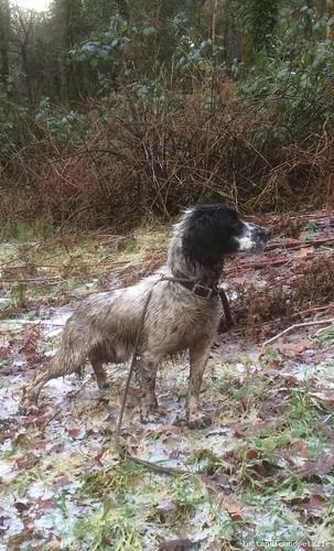 Fri, Apr 10th, 2015 Lost Male Dog - Kilmuckridge Area, Kilmuckridge, Wexford