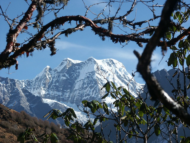 Mera Peak seen between the branches of a rhododendron