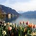 Springtime in Switzerland - Montreux, Switzerland