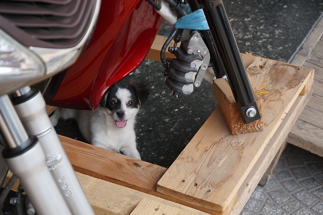 The cutest scooter mechanic