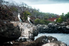 North Seymour Island, Galapagos Islands, Ecuador.