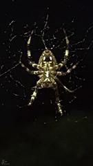The Itsy Bitsy Spider_0002
