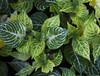Botanic Gardnes-101