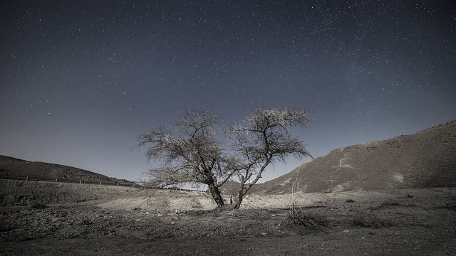 Desert silence under moonlight