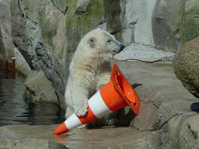 Lili, Zoo am Meer