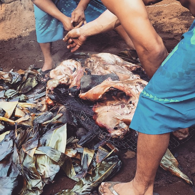 #kvphawaii Hello Pork! Digging up roast pig for @RoyalKonaResort luau. NOM!