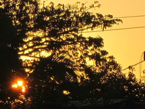 world sun tree sunrise asia philippines nueva luzon viscaya northluzon bayombong