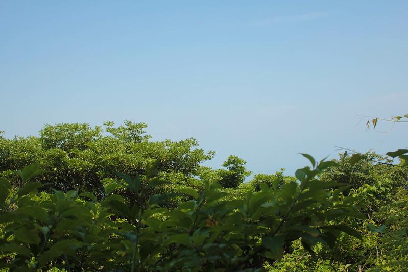 20140531-開聞岳-0272.jpg