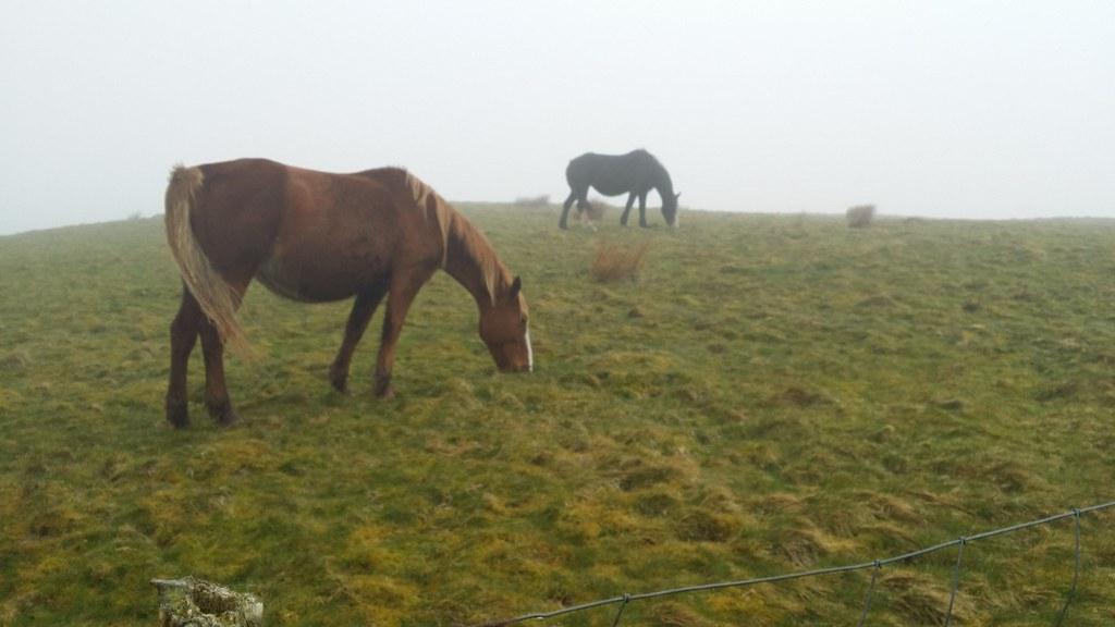 Wild horses #sh