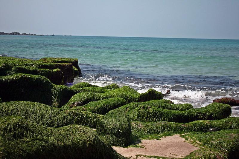 17度C台二線景點-石門-老梅綠石槽 (26)