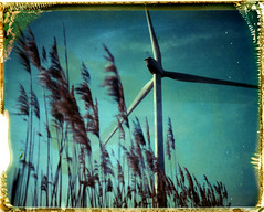 Reeds and Wind, Red Tile farm, Warboys 2015