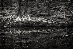 Reflections, Rock Creek