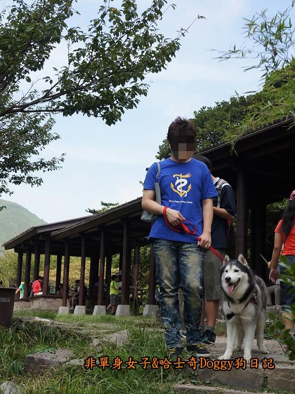 哈士奇Doggy2013陽明山二子坪16