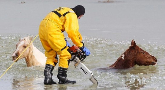 Firefighters brave icy pond to save two horses