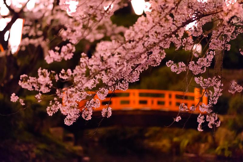 打吹公園 桜-22