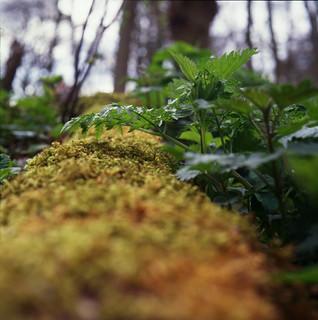 Tiny moss world