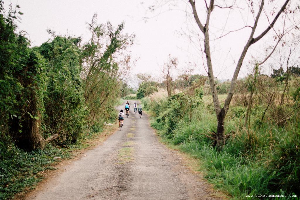Untitled 白茅草 踩單車就是可以找到這樣的仙境﹣白茅草失樂園 17098859770 6c2bd4b23d o